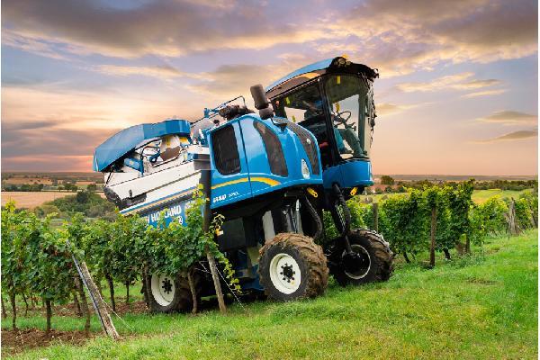 Ayudas para el viñedo en Aragón