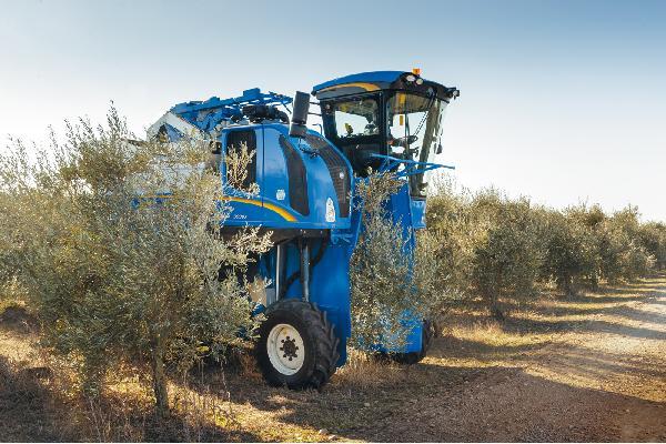 Norma de calidad más transparente para el aceite de oliva